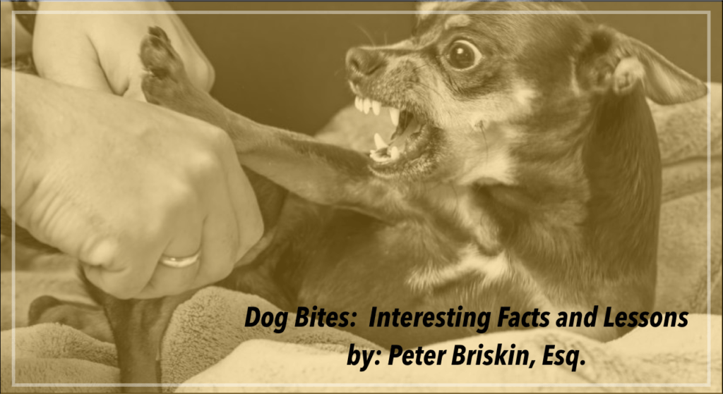Dog Bite Attorney Nyc